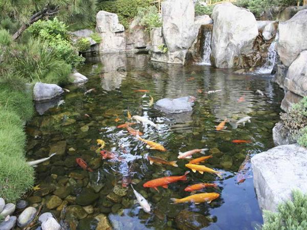 Как сделать пруд для разведения рыбы своими руками
